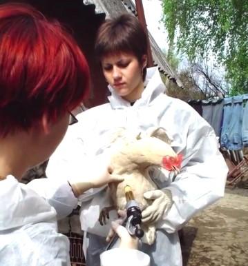 articulo-belgorod-veterinaria2