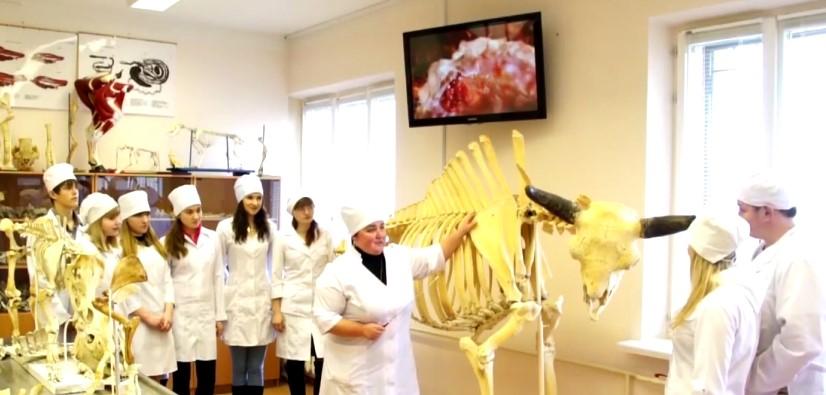 Universidad Agroindustrial de Belgorod: Carrera de Veterinaria