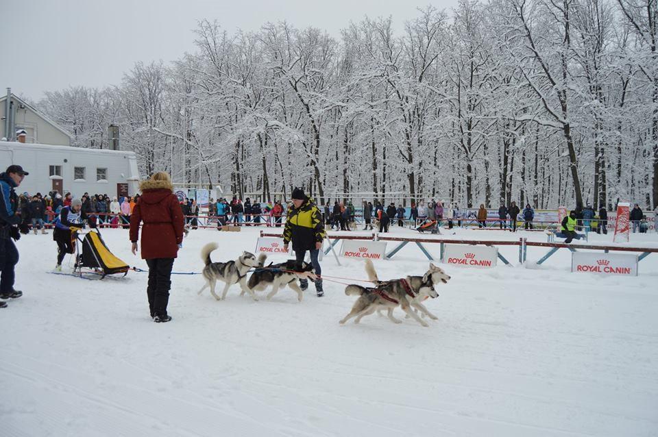 Carrera de trineos jalados por huskies siberianos
