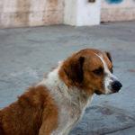 Curiosidades de Rusia: Los perros callejeros de Moscú