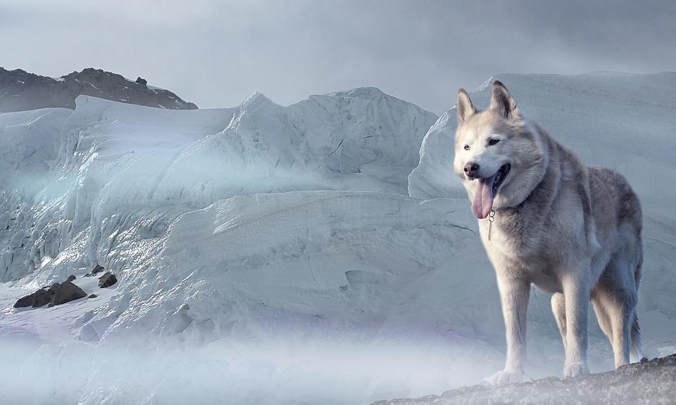 5 Animales únicos de Siberia, Rusia