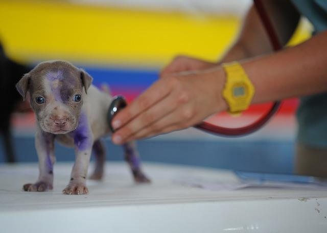 ¿Interesado en estudiar veterinaria en Rusia?
